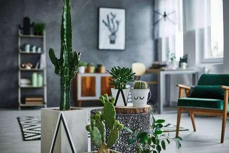 18. Decoração para sala moderna com cimento queimado e vasos de cactos – Foto: Habitissimo