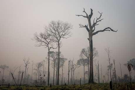 Queimadas são usadas para transformar florestas em pastagens ou para facilitar grilagem das áreas, segundo relatório da Human Rights Watch