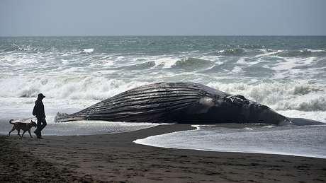 O aquecimento das águas põe em perigo a vida marinha.