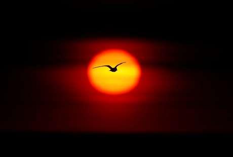 Voo de um pássaro ao pôr-do-sol no Lago Ontário, em Hamilton, Canadá  15/06/2017 REUTERS/Mark Blinch