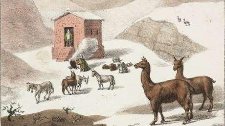 Os patagônios usavam a pele de guanacos para fabricar suas roupas e calçados