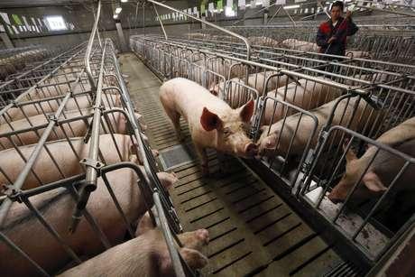 Criação de porcos em Podsopki , Rússia  12/08/2014 REUTERS/Ilya Naymushin