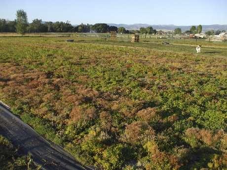 Área agrícola no oeste de Montana, EUA  19/11/2009 REUTERS/Laura Zuckerman