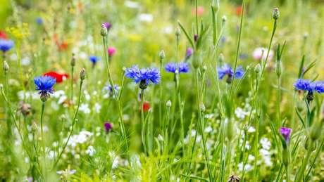 A luz extra de sol a cada semana é a razão pela qual a primavera é conhecida como a estação das flores