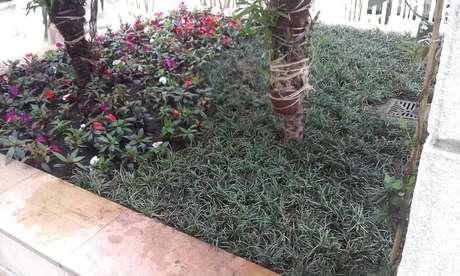 53. Este pequeno jardim conta com a presença de grama do tipo preta. Fonte: Pinterest