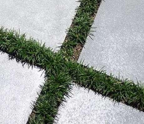 8. A grama preta anã pode preencher espaços entre placas de concreto. Fonte: Pinterest