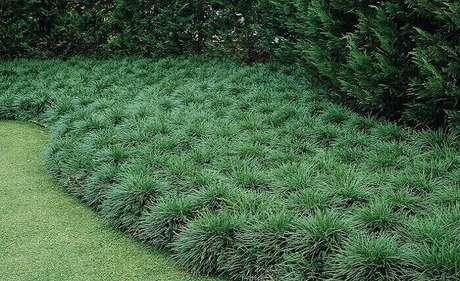 9. A grama preta compõem a jardinagem desse quintal. Fonte: Pinterest