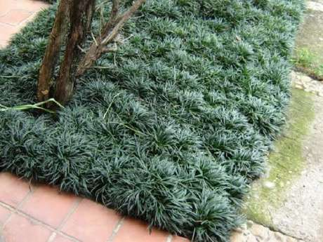 23. Grama preta compõe preenche pequenos pedaços no jardim. Fonte: Pinterest