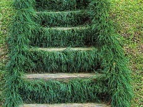 60. A grama do tipo preta preenche os espaços por entre os degraus da escada. Fonte: Pinterest