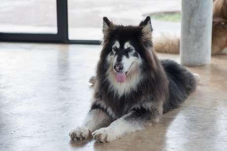 Animais domésticos precisam ser treinados especialmente para serem levados ao escritório do Google