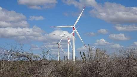 """""""Gerar energia renovável mediante a força dos ventos é uma importante estratégia para que o Brasil cumpra suas metas de desenvolvimento sustentável e precisa ser estimulada. Mas ela não é inofensiva à natureza. Há impactos sobre a fauna, principalmente morcegos e aves, que controlam pragas. Eles se chocam contra as pás das hélices e morrem."""""""