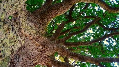 A perda de todas as árvores do mundo teria um profundo impacto sobre o clima