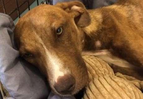 Cão é resgatado cinco semanas após furacão nas Bahamas.