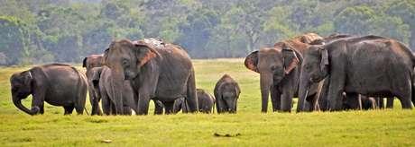 A vida selvagem no Sri Lanka, além das paisagens paradisíacas, tornaram o país um refúgio para os turistas