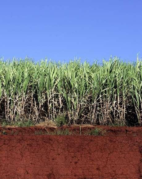 Plantio de cana em Sertãozinho (SP)  21/04/2007 REUTERS/Paulo Whitaker