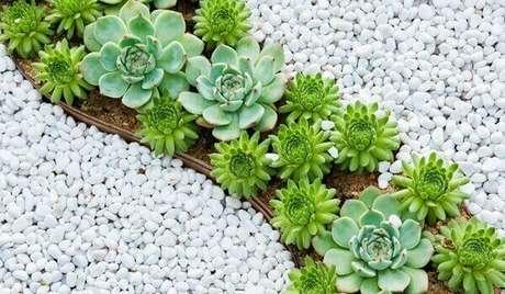8. Jardim de suculentas e pedras dolomitas brancas realçam a cor de cada flor. Fonte: Pinterest