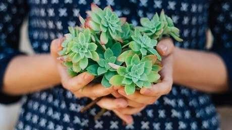 15. Como cuidar de um jardim de suculentas. Fonte: Pinterest