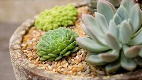 23. Vaso delicado com diferentes flores de suculentas. Fonte: Pinterest