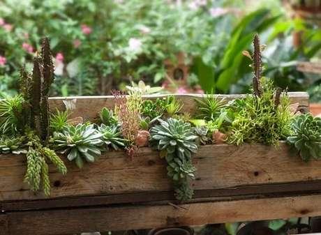 49. Forme um lindo jardim de suculentas com um pedaço de madeira. Fonte: Claudia Regina La Calle