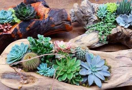 9. Jardim de cactos e suculentas cultivadas em troncos de madeira. Fonte: Pinterest