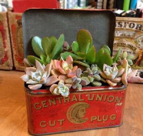 57. Suporte criativo para o jardim de suculentas. Fonte: Pinterest