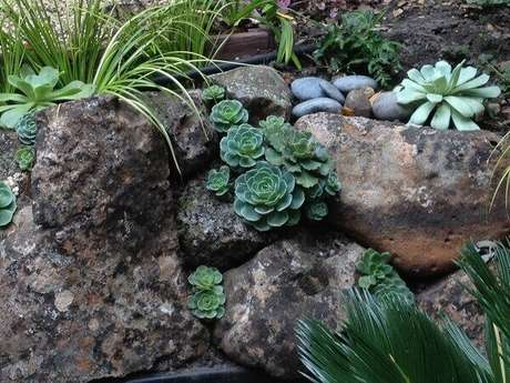 37. Jardim de suculentas e pedras. Fonte: Pinterest