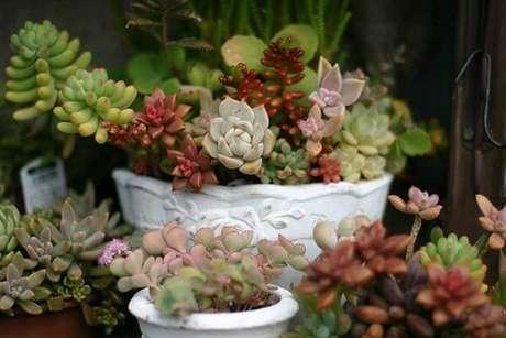 27. O vaso branco realça as cores do jardim de suculentas. Fonte: Pinterest