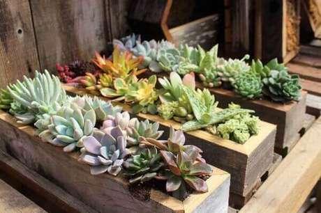 60. Mini jardim de suculentas foi montado em caixas de madeira. Fonte: Sgplants