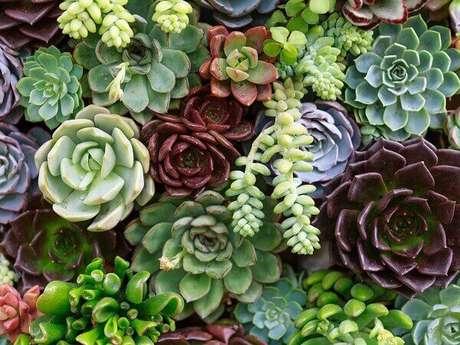 39. Diferentes tipos de flores formam um lindo jardim de suculentas. Fonte: Southern Living
