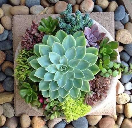 1. O jardim de suculentas forma um arranjo lindo. Fonte: Pinterest