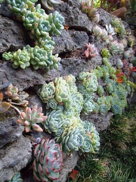 42. O jardim de suculentas e pedras encanta a decoração do ambiente. Fonte Pinterst