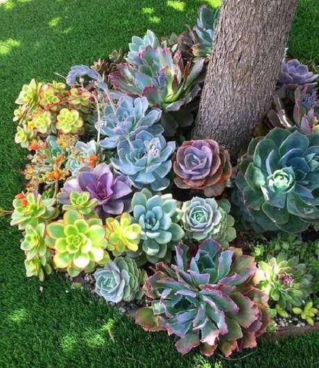 63. O jardim de suculentas no chão forrou a base da árvore. Fonte: Pinterest
