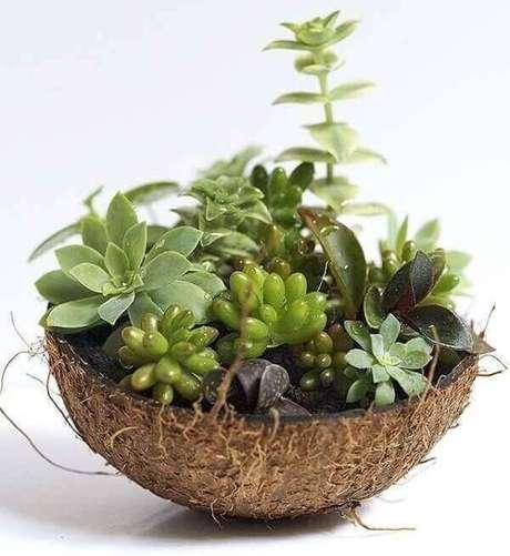 67. Utilize meia casca de coco seco para montar seu mini jardim de suculentas. Fonte: Pinterest