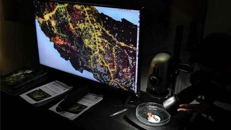 As telas inteligentes do zoológico de Paris vão mostrar a locomoção do 'Blob'