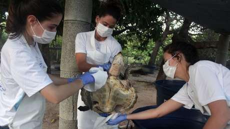 Tartaruga recebe cuidados no Centro de Reabilitação de Mamíferos Marinhos do Aquasis (CRMM) na cidade de Caucaia, no Ceará