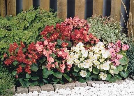 8. As begônias são plantas que purificam o ambiente. Fonte: Plantas Sonya
