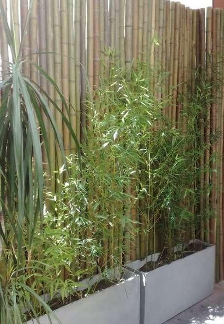 39. Modelo de cerca de bambu fixada atrás dos vasos de concreto. Fonte: Pinterest