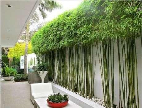 54. Cerca viva de bambu encantam a decoração do espaço. Fonte: Pinterest