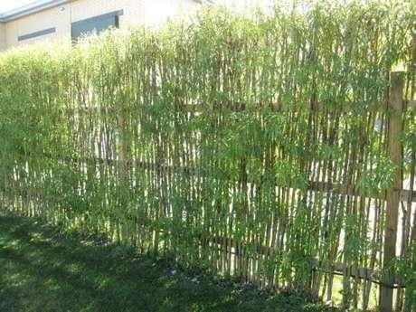 55. Cerca viva de bambu plantada para delimitar a área do terreno. Fonte: Pinterest