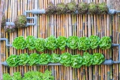 74. Modelo de cerca de bambu serve de sustentação para horta vertical. Fonte: Pinterest
