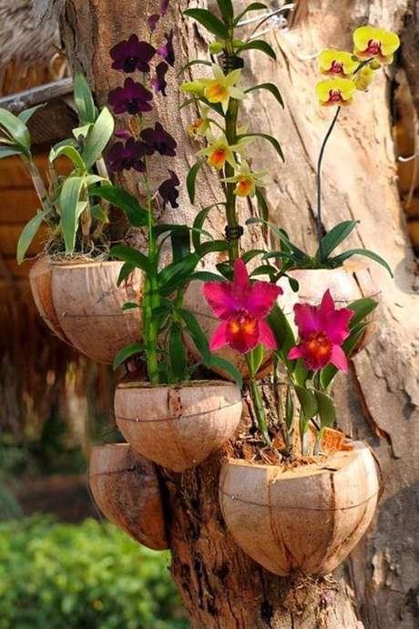 37. A estrutura do coco pode ser fixada no tronco da árvore formando lindos enfeites para jardim. Fonte: Pinterest