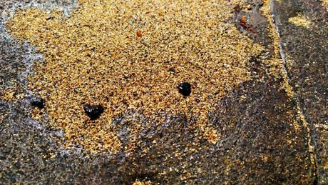 Fragmentos de óleo na praia norte da Ilha de Santa Bárbara, em Abrolhos