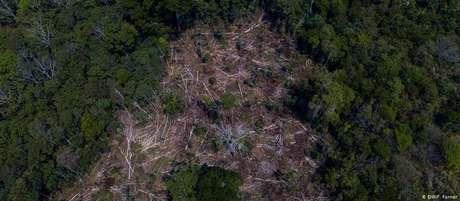 Área desmatada em Rondônia, em agosto de 2019