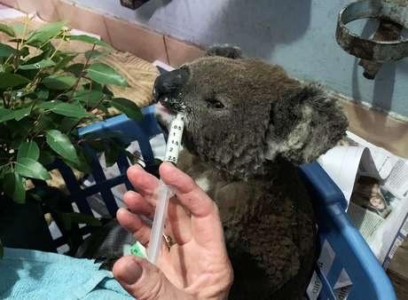 Resgatado de reserva natural, coala queimado é alimentado em Port Macquarie, na Austrália 07/11/2019 REUTERS/Stefica Nicol Bikes