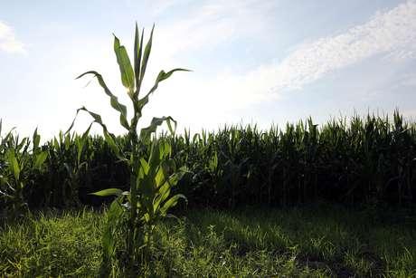 Plantio de milho em Adel, Iowa (EUA)  05/07/2018 REUTERS/Scott Morgan