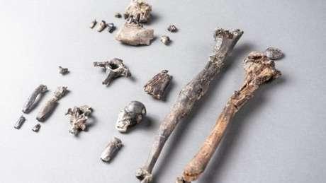 Esqueleto mais completo encontrado é de um macho com altura de cerca de um metro, semelhante à de um bonobo atual