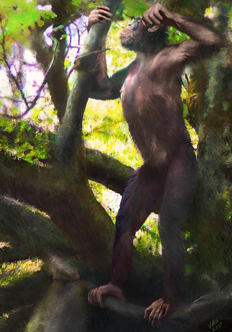 A descoberta indica que os primatas começaram a andar de pé nas árvores, antes de chegar ao chão