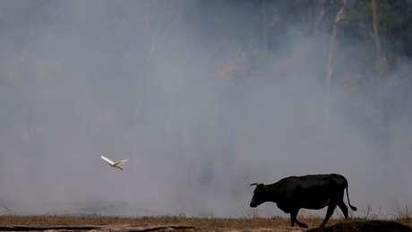 Carlos Nobre diz que maioria do desmatamento é decorrente da grilagem, por um lado; e do desmatamento sem autorização em propriedade privada, do outro