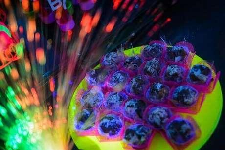 46. Os pratos fluorescentes destacam os docinhos colocados sobre a mesa na festa neon. Foto: Pinterest