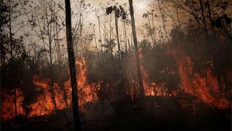 Mais de 650 mil m² de floresta foram atingidos pelo fogo em Alter do Chão, no Pará